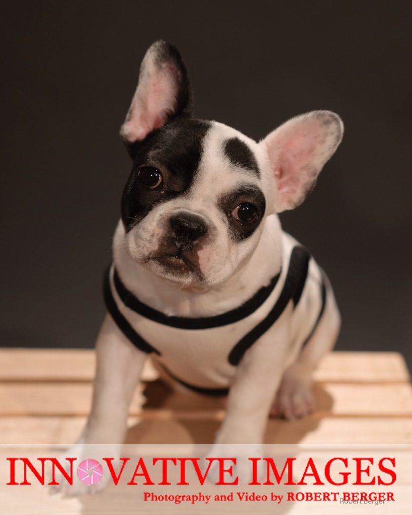"""""""Pets of Character"""" Pet Portraits Dog Portraits Puppy Portrait Photography"""